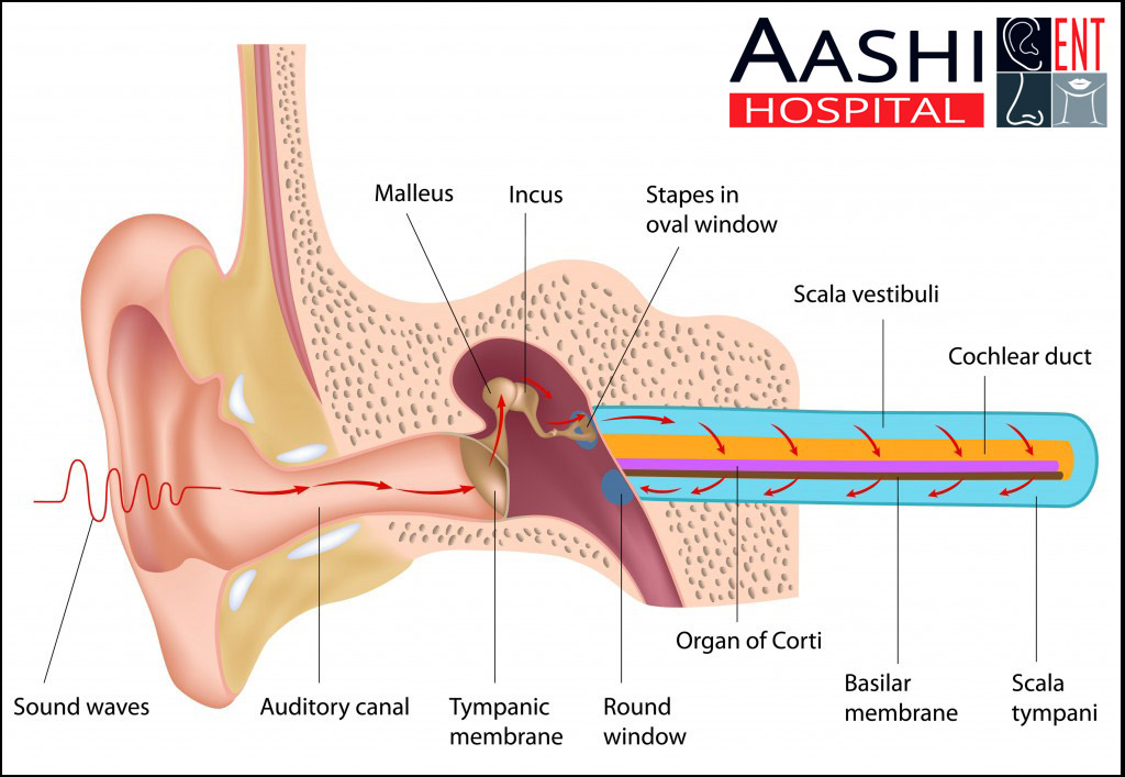 Hearing Tests, Ear, Nose and Throat (ENT) surgeon